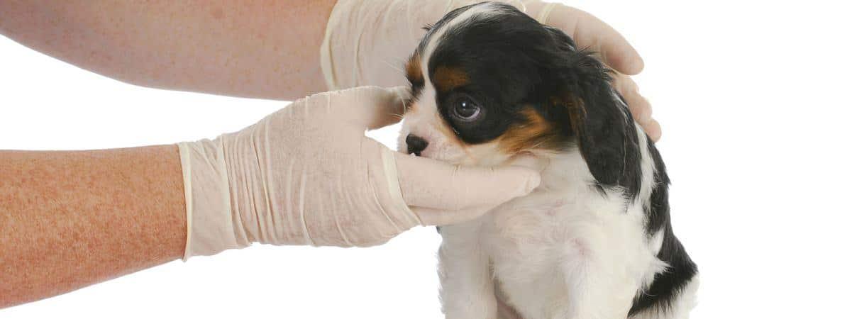 New-Lambton-vet-Puppy-check-up