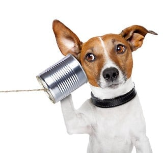 total-pets-contact-us1
